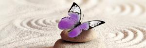 Vlinder in evenwicht met Petra